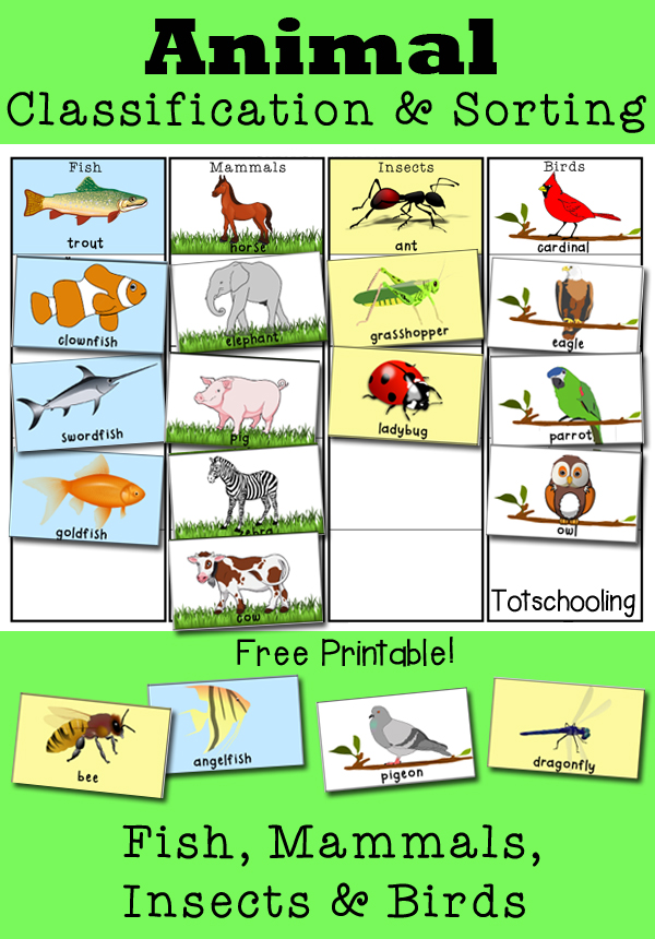 Animal Classification And Sorting Activity Totschooling