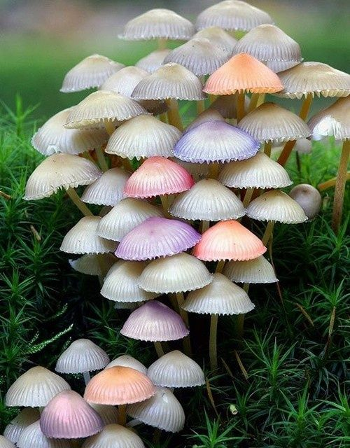 Mushroom Patch