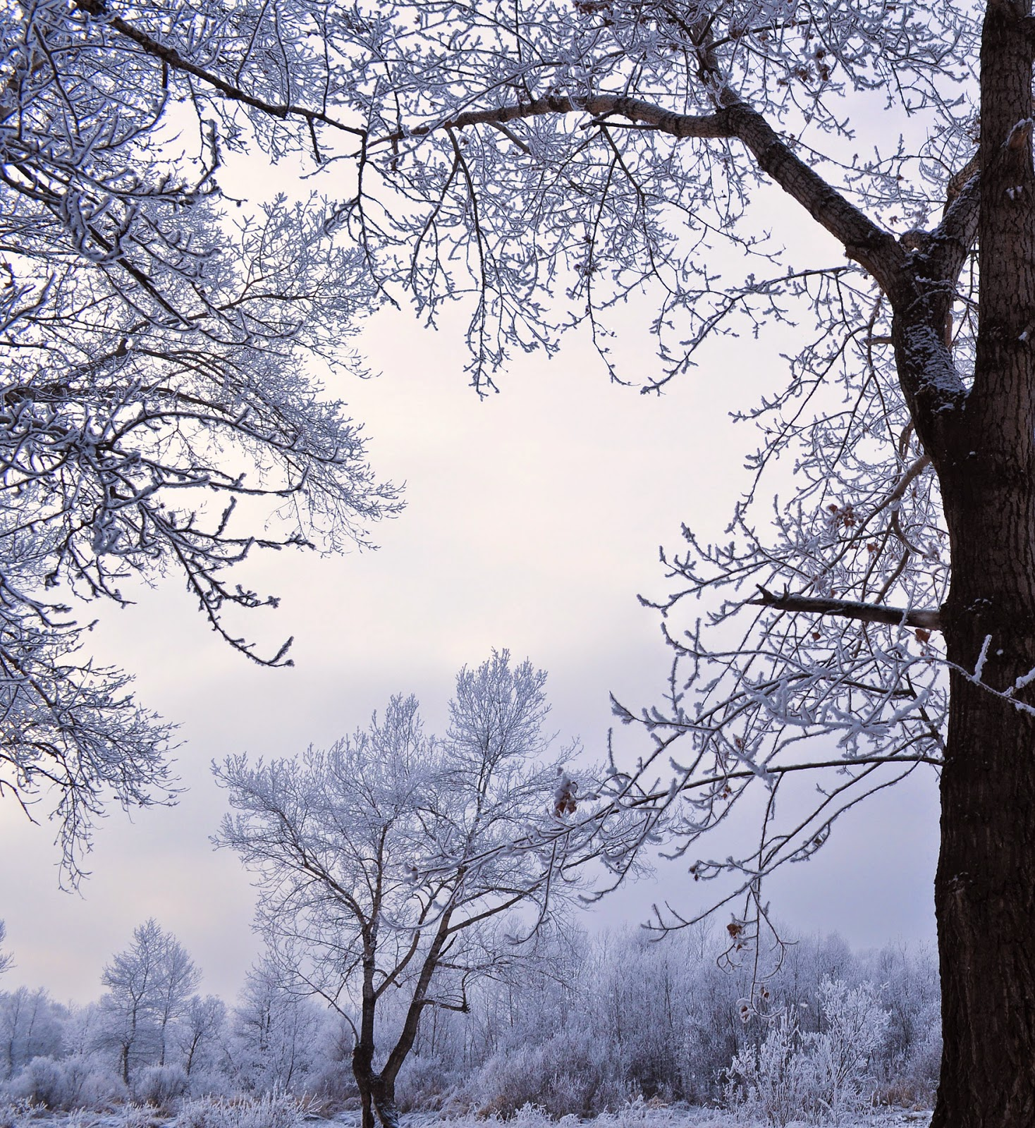 Christmas tag neige