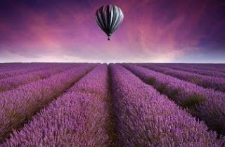 Foto Bunga Lavender Ungu yang Indah 2