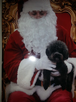 Black poodle with Santa