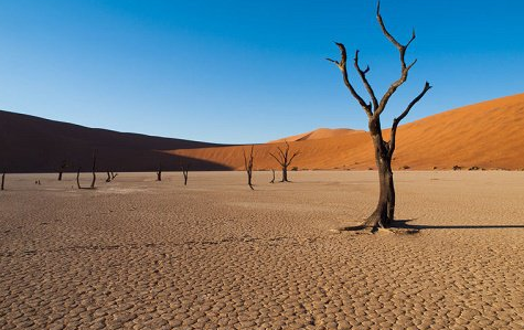 The leave National Park, Namib, Namibia