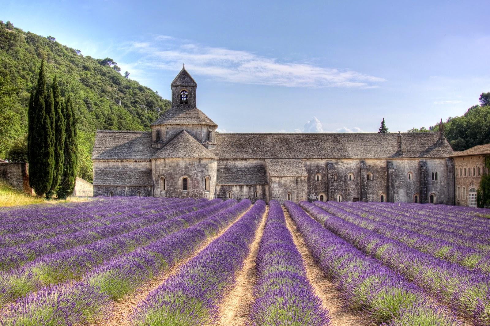 L'Abbaye di Sénanque circondata dai campi di lavanda in Provenza