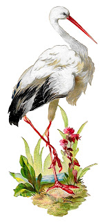 white stork bird image digital clipart illustration artwork