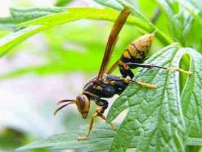 wasp in plant