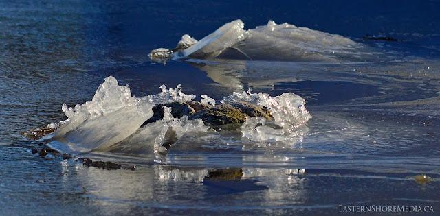 Rocks on Porters Lake poke through the ice.