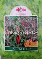 cabai f1 pelita 8,cabai rawit panah merah,cabai kecil panah merah,panah merah,cabe f1 pelita