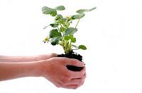 peluang usaha di daerah sepi, usaha di daerah sepi, bisnis di daerah sepi, bisnis di tempat sepi, bisnis bibit tanaman, bibit tanaman, bibit, usaha bibit