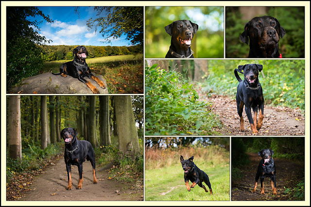 hairy dog photography, special offer aberdeen photography, pet photographer aberdeen