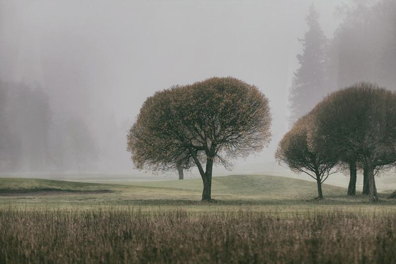 syksy, sumu, fog, usva, Finland, Suomi, Finlandphotolovers, outdoors, nature, luonto, luontovalokuva, luontovalokuvaus, Visualaddict, valokuvaaja, Frida Steiner, natural, trees, organic