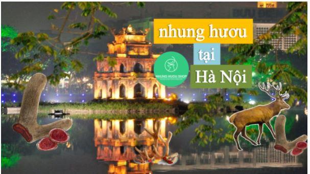 Địa chỉ bán nhung hươu tại Hà Nội uy tín giá tốt