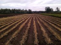 Feld Stevia Projekt Chile Anden Wasserbedarf