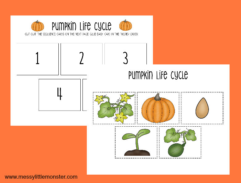 picture relating to Life Cycle of a Pumpkin Printable known as Printable Pumpkin Everyday living Cycle Worksheets - Messy Minor Monster