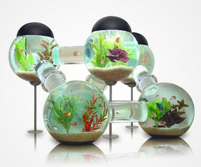 aquarium très original