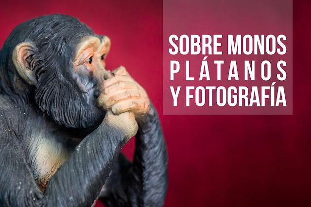 Sobre monos, plátanos y fotografía...