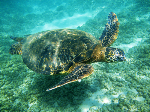 Sound Exposure Sea Turtles