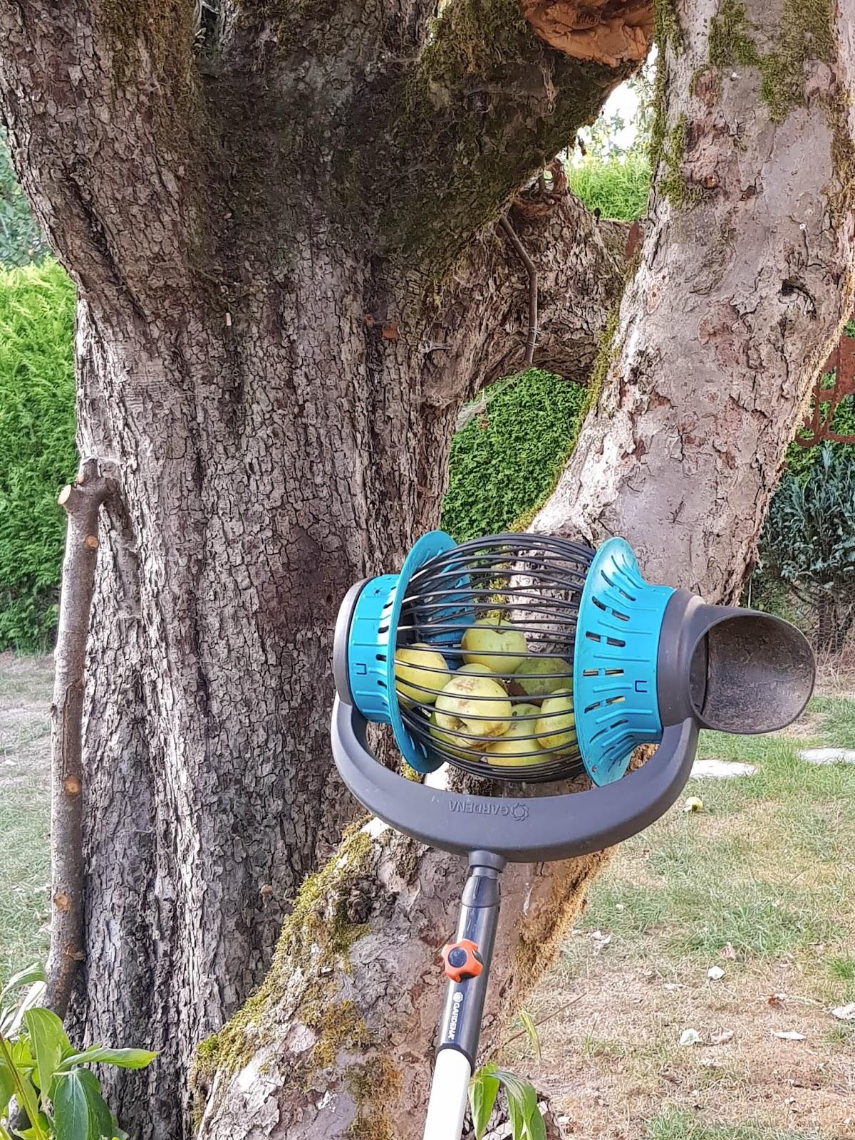 Tipp zum Äpfel sammeln. leicht gemacht mit dem Rollsammler Herbst, Rücken, Apfel ernten Rückenschonend, Tipps, Ratgeber, pflücken 4
