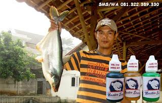 Essen Untuk Umpan Ikan Patin Indukan