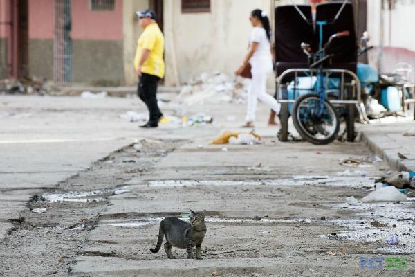 Havana cats