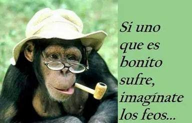 15 imagenes chistosaa con frases