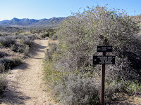 West side Loop junction in Black Rock Canyon, Joshua Tree National Park
