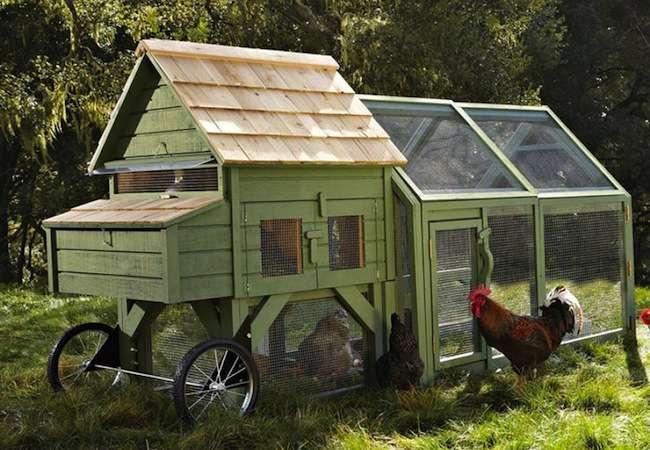 70 Desain Kandang Ayam Petelur dan Broiler Minimalis ...