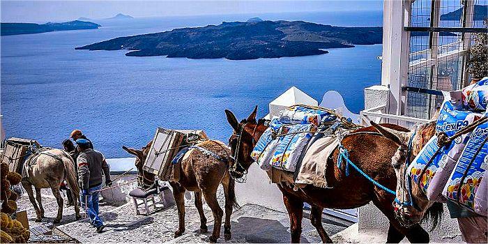 Asini di Santorini, Grecia