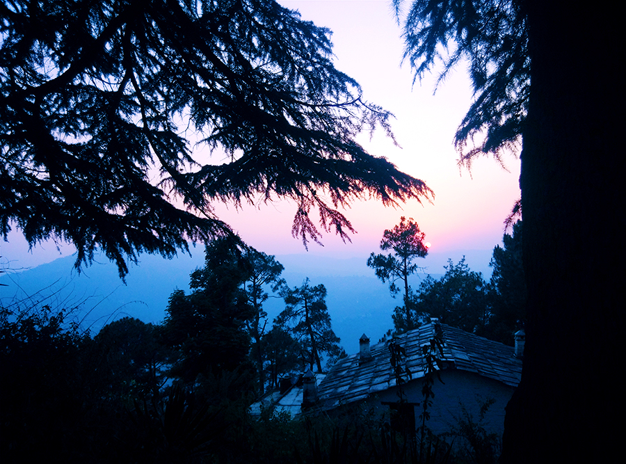 cedar, travel blog ,Kumaon