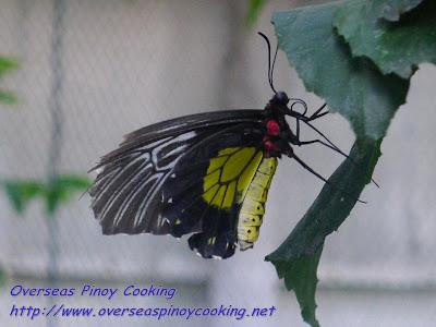 Julian Jumalon's Butterfly Sanctuary