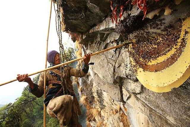 Το μυστήριο με το «μέλι της τρέλας». Πωλείται πάνω από 100 δολάρια το κιλό και είναι παραισθησιογόνο. Παράγεται από τεράστιες μέλισσες και μπορεί να σκοτώσει...
