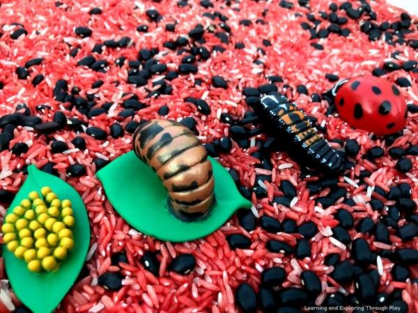 Ladybird Sensory Play