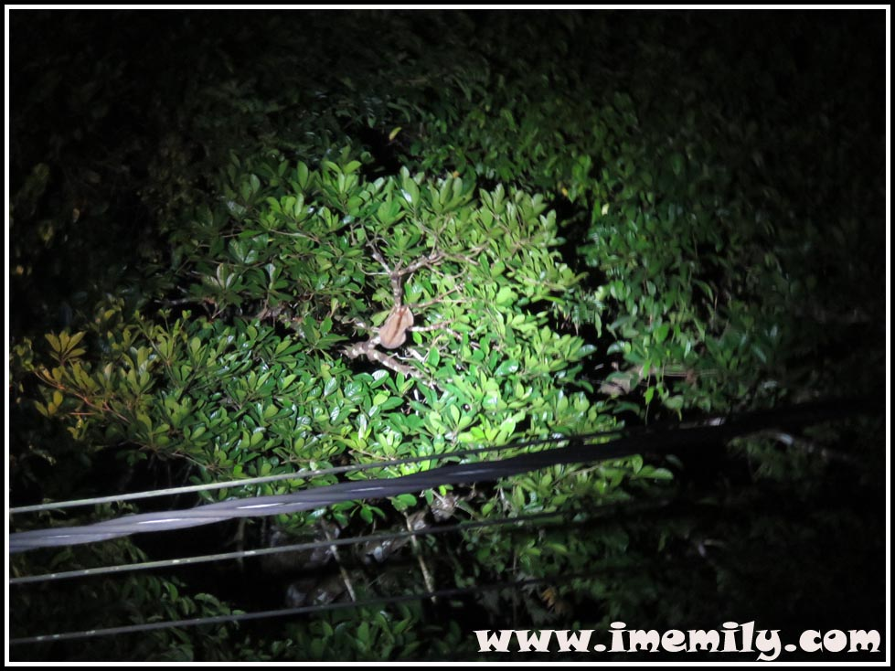 Night Safari @ Myne Resort, Bilit Village