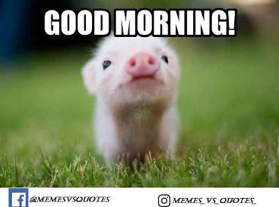 Good Morning Pig