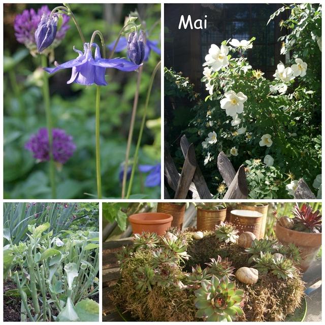 Dünenrose Akelei Allium Sempervivumkranz und Chelsea Flowerschnitt