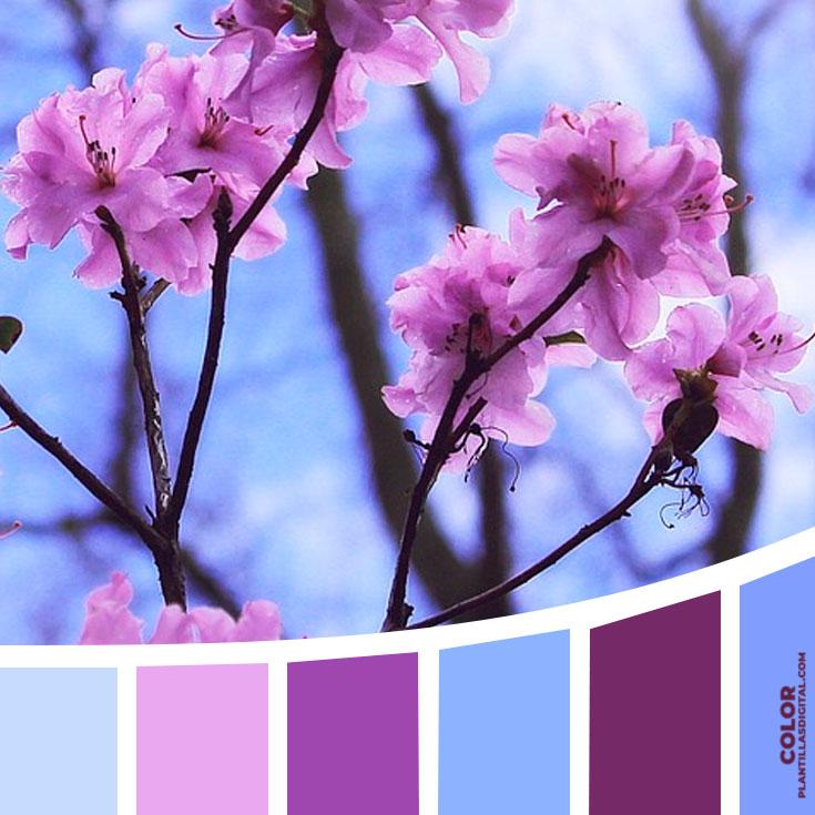 color_313