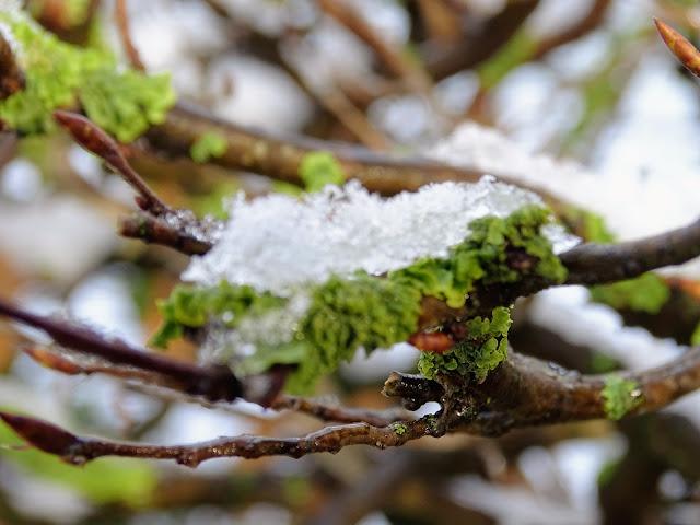 hiverhautdefrancenature
