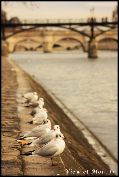 quais de seine parisien