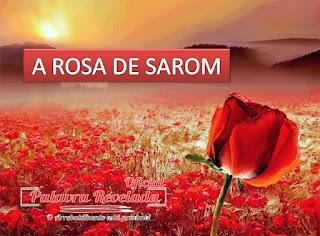 A ROSA DE SAROM