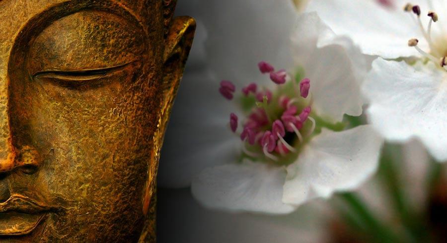 10 enseñanzas de Buda