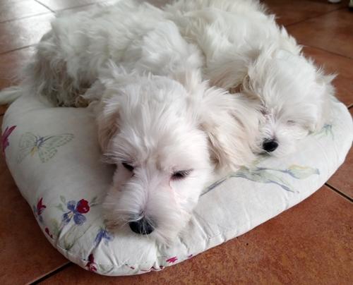 blog o nauczaniu domowym i psach