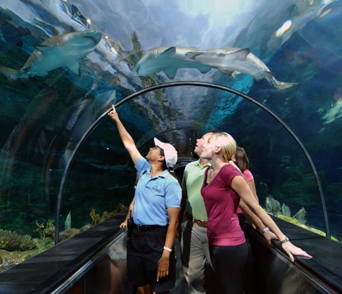 SeaWorld Orlando Tubarões Shark Encounter