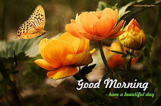 cool morning wishes with Beautiful flowers butterfly