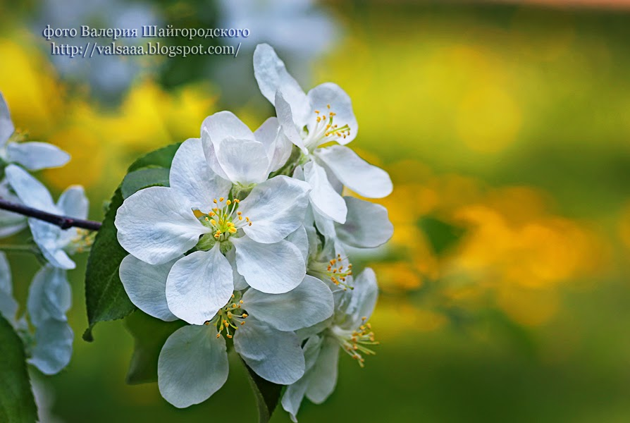 #цветы #Чернигов