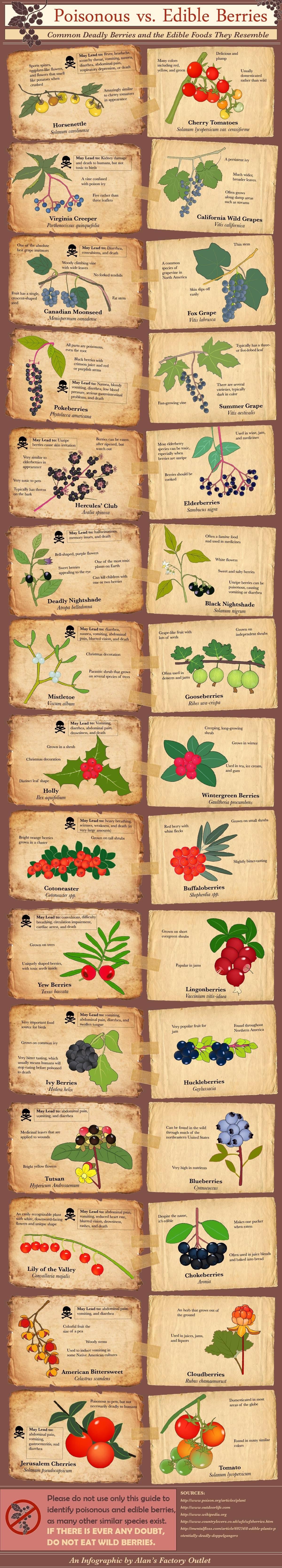 Poisonous vs Edible Berries