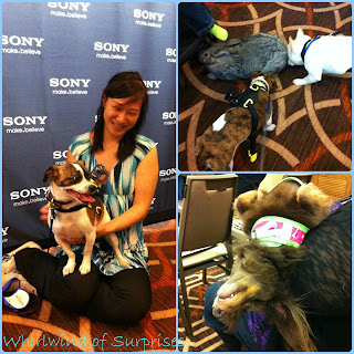 #Frockstar and JR testing out the new Sony Pet Cam and all sorts of furry friends