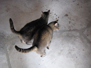 Two cats on rodent patrol (www.BarnCatBuddies.org)