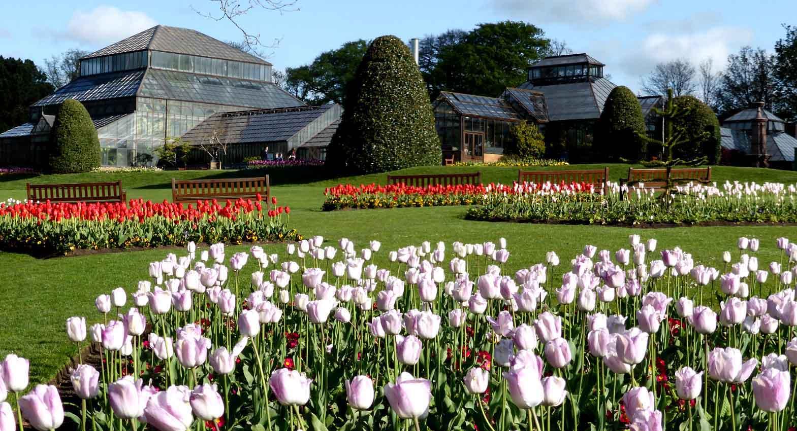 alex and bob s blue sky scotland glasgow u0027s botanic gardens and