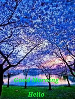 Good-Morning