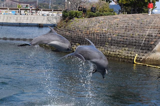 Kagoshima Dolphins