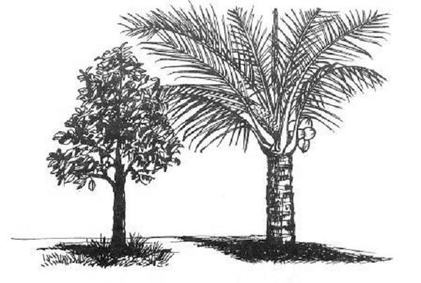 gambar ilustrasi tumbuhan